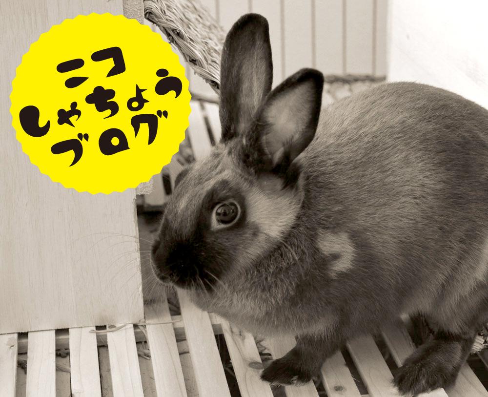 ニコ社長ブログ-button